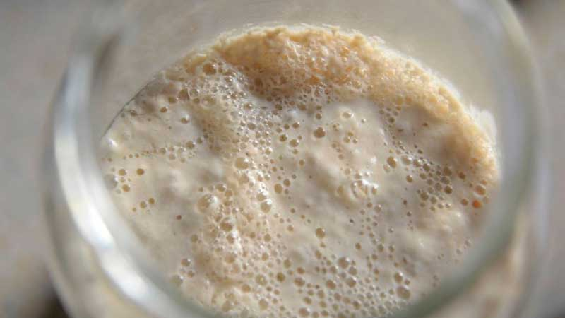 How To Tell If Your Sourdough Starter Is Bad